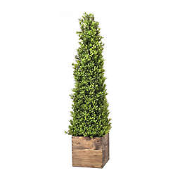 Bee & Willow™ Home Potted Boxwood Obelisk