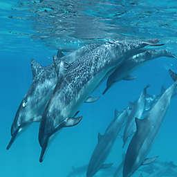 Wild Dophin Swim by Spur Experiences®