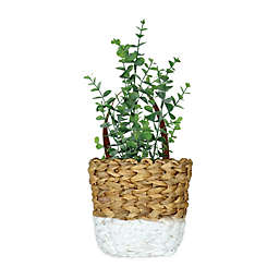 Prinz Hanging Basket 14.75-Inch x 6-Inch Eucalyptus Plant Wall Art in Natural