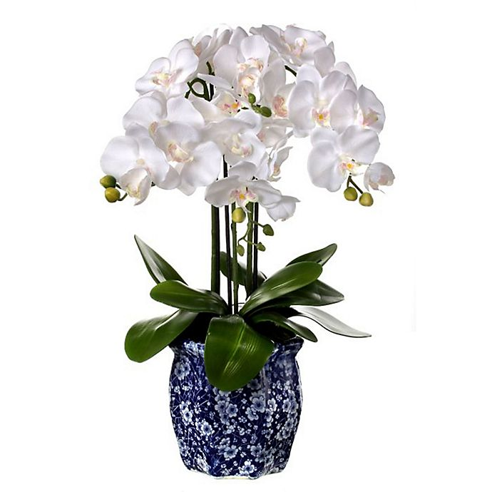 Alternate image 1 for One Kings Lane Open House™ 23-Inch Potted Phaleonopsis Orchid in Ming Pot