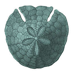 Sand Dollar 12-Inch Square Canvas Wall Art
