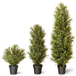 National Tree Argentia Plant with Green Pot