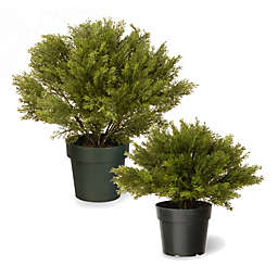 National Tree Globe Juniper with Green Pot
