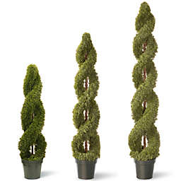 National Tree Double Cedar Spiral Plant with Green Pot