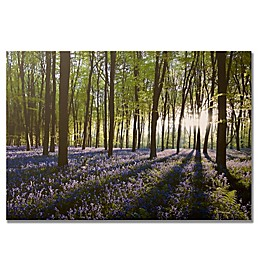 Bluebell Fields Landscape Canvas Wall Art
