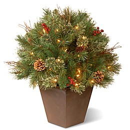 National Tree Company 24-Inch Glistening Pine Pre-Lit Topiary Bush with Clear Lights