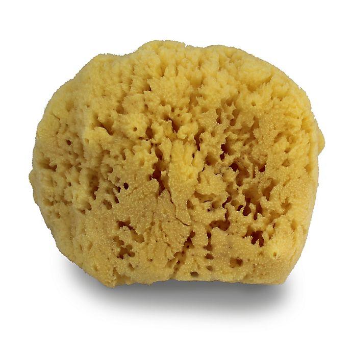 Alternate image 1 for Swissco Natural Sea Sponge