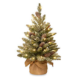 National Tree 2-Foot Snowy Concolor Fir Tree Pre-Lit with 50 Lights