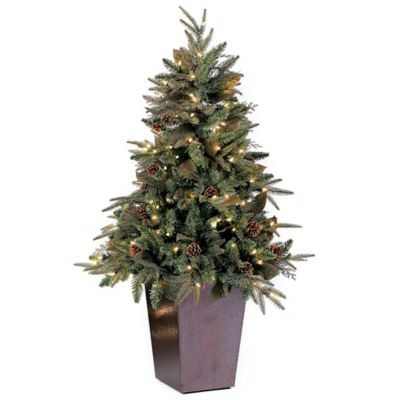 Bethlehem Lights 5 Foot Green River Spruce Potted