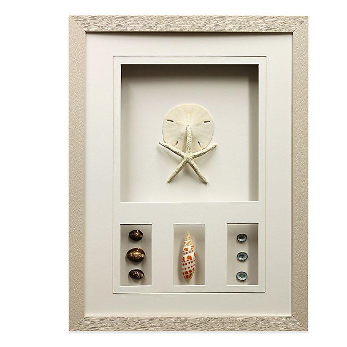 Star Creations Sea Urchin Shadow Box 16-Inch x 21-Inch Frame | Bed ...