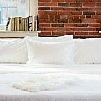 Beantown Bedding Laundry-Free Linens Luxury Disposable Cot Sheet Set in White