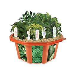 Culinary Herb Garden Dome Terrarium