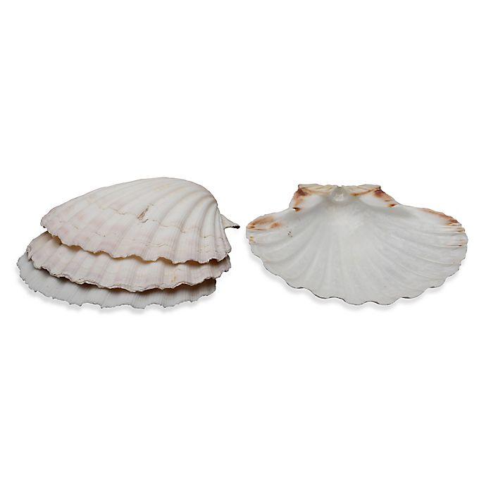 Alternate image 1 for Natural Baking Shells (Set of 4)