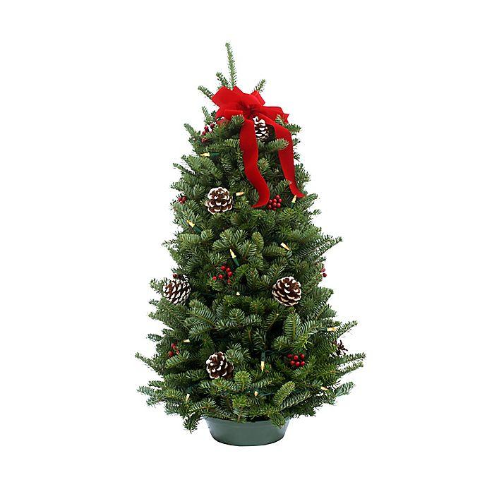 Fresh Christmas Trees Near Me.Classic 28 Inch Pre Lit Tabletop Fresh Christmas Tree Bed