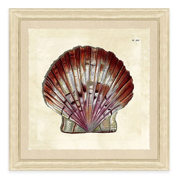 Alternate image 1 for Sea Shell Print V Giclée Framed Wall Art