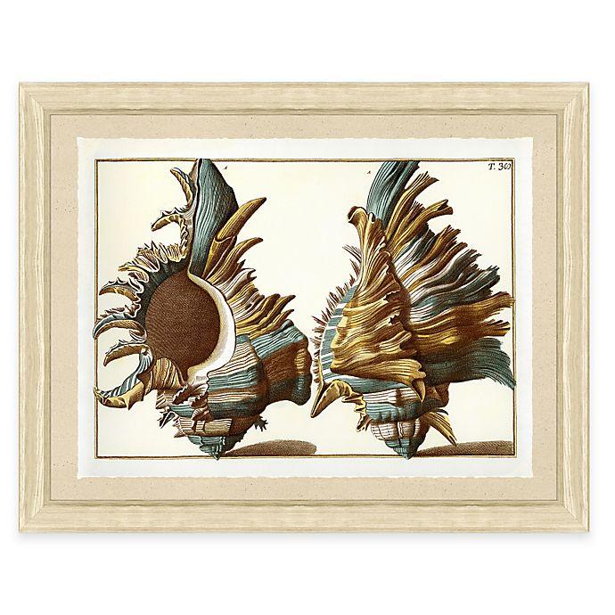 Alternate image 1 for Teal Shell Print II Giclée Framed Wall Art