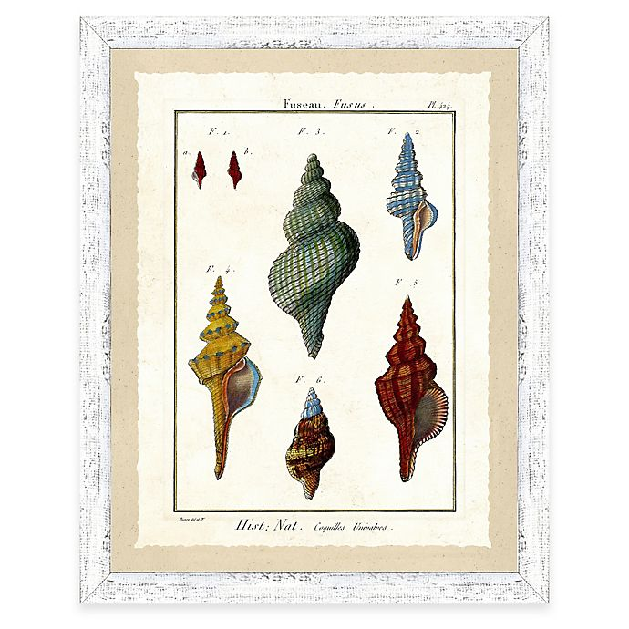 Alternate image 1 for Sea Life Print II Giclée Framed Wall Art