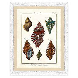 Framed Giclee Colorful Shell Print Wall Art II