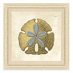 Sand Dollar Giclée Framed Wall Art