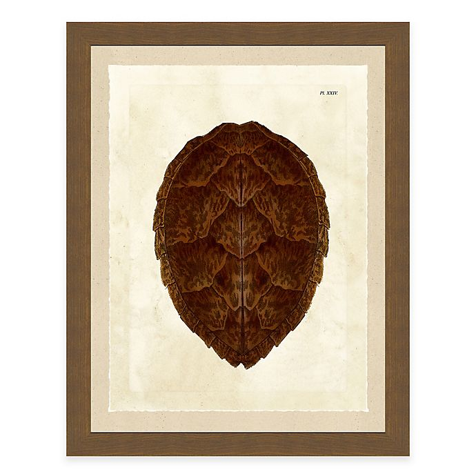Alternate image 1 for Framed Giclèe Turtle Shell Print III