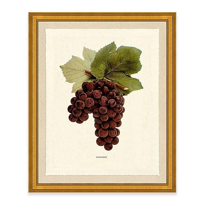 Alternate image 1 for Grape I Framed Art Print