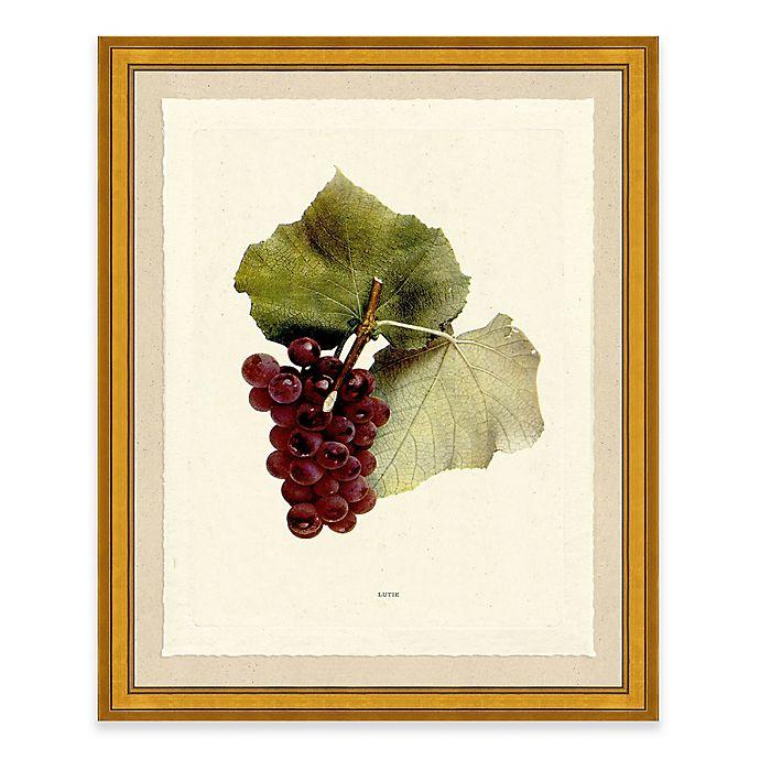 Alternate image 1 for Grape II Framed Art Print