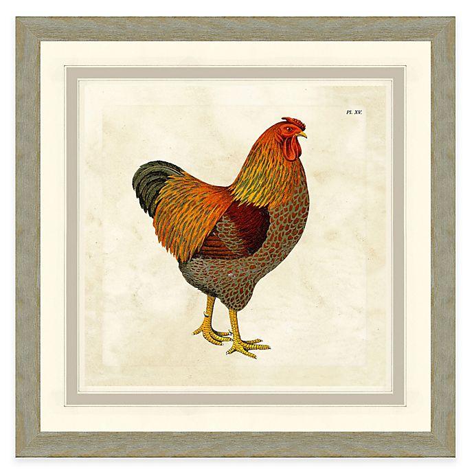 Alternate image 1 for Framed Giclée Chicken II Print Wall Art