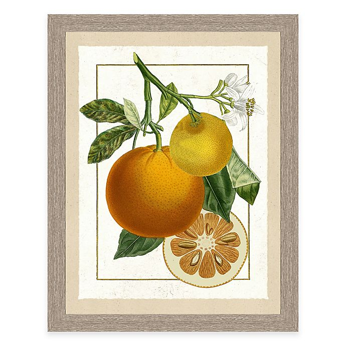 Alternate image 1 for Framed Giclée Orange Grouping II Print Wall