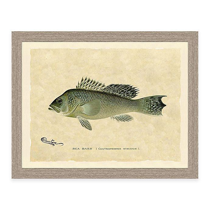 Alternate image 1 for Sea Bass Framed Art Print