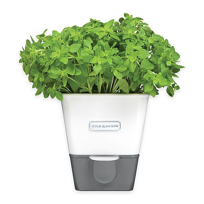 Alternate image 1 for Cole & Mason Self-Watering Potted Herb Keeper