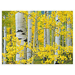 Aspen Trees All Weather Outdoor Canvas Art