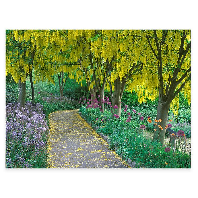 Goldenchain Tree All Weather Outdoor Canvas Wall Art Bed Bath Beyond