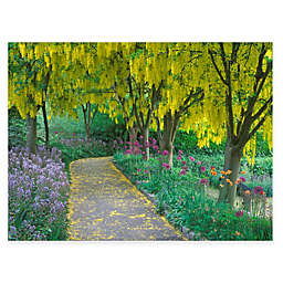 Goldenchain Tree 40-Inch x 30-Inch All-Weather Outdoor Canvas Wall Art
