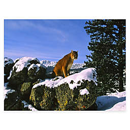 Mountain Majesty All Weather Outdoor Canvas Art