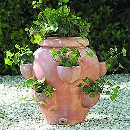 Campania Tascandi Strawberry Jar Planter in Terra Cotta (Set of 2)