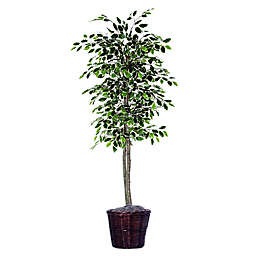 6-Foot Fabric Variegated Ficus Tree with Brown Rattan Basket