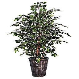 4-Foot Fabric Variegated Ficus Extra-Full Bush with Dark Brown Rattan Basket