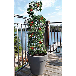 RTS Home Accents Vertical Grow Frame