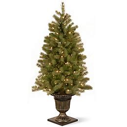 National Tree 4-Foot Downswept Douglas Fir Pre-Lit Entrance Christmas Tree with Clear Lights