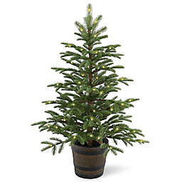National Tree Company 4-Foot Norwegian Spruce Pre-Lit Entrance Tree with Clear Lights