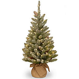 National Tree 3-Foot Battery-Operated Snowy Concolor Fir Christmas Tree with White Lights