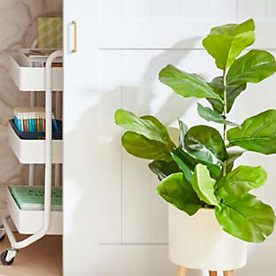 greenery for a lively space
